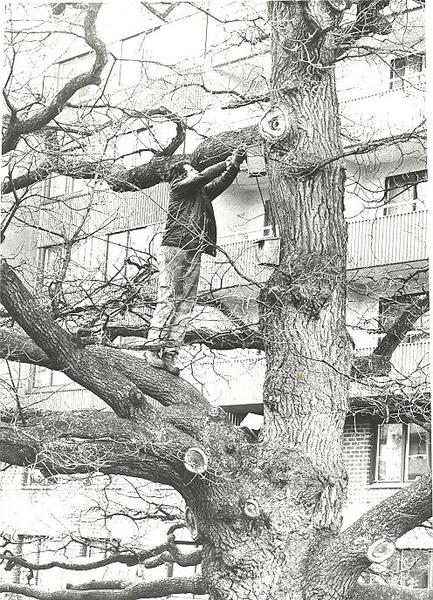 Fisksätra Minnen 2004 En man som klättrar på ett träd.jpg