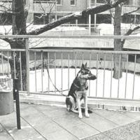 Hund i Fisksätra Torget.jpg